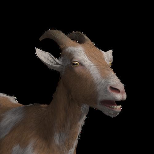 Thumbnail image for Goat (MW)