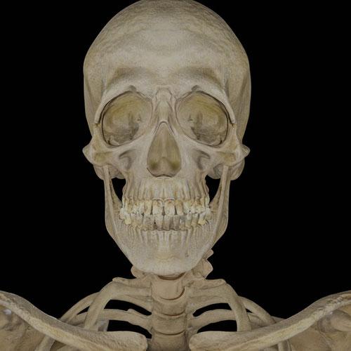 Thumbnail image for Bonehead Skeleton