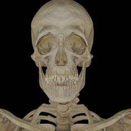 Bonehead Skeleton