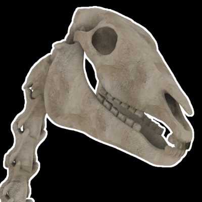 Thumbnail image for Skeletal Horse