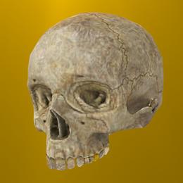 Halo: Reach - Oddball Skull