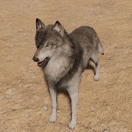 [MGSV] D-Dog