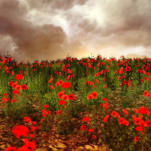 Thumbnail image for Perihelion Poppy Flower Field
