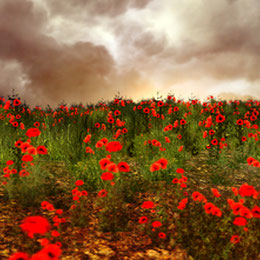 Perihelion Poppy Flower Field