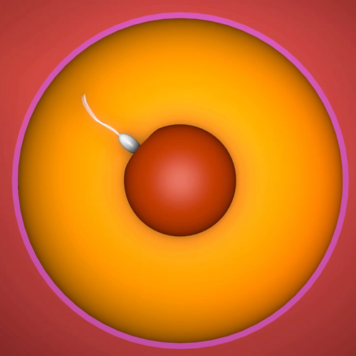 Thumbnail image for Abstracted Womb & Sperm