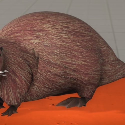 Thumbnail image for Beaver