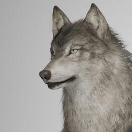 Dog NSFW
