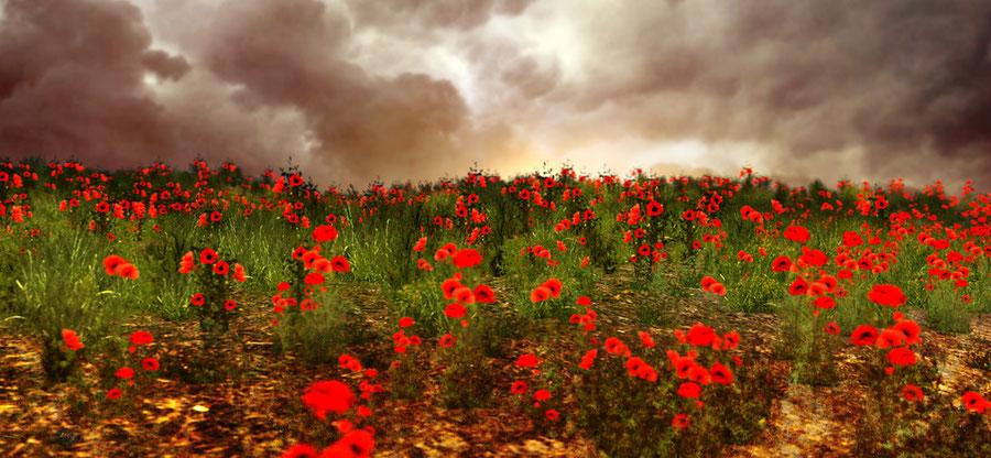 Perihelion Poppy Flower Field