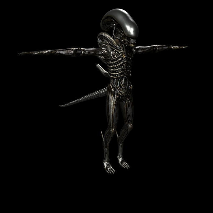 Male/Female xenomorph