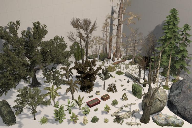 Plants & Rocks