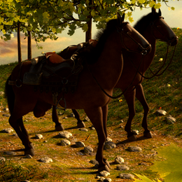 Male Female horse