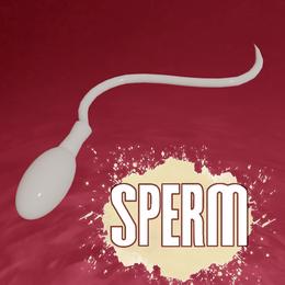 Sperm Model