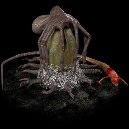 Facehugger+egg+chestbuster